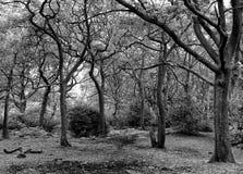 Monochromatyczna lasowa polana zdjęcie royalty free