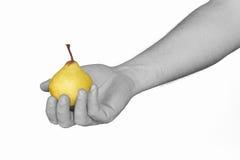 Monochromatyczna mężczyzna ręka trzyma żółtej bonkrety. Obraz Royalty Free