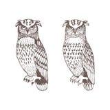 Monochromatyczne graficzne wektorowe sowy ustawiać odizolowywać royalty ilustracja