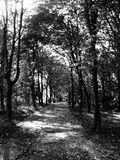 Monochromatycznej czarny i biały jesieni lasowa drewniana fotografia Obraz Royalty Free