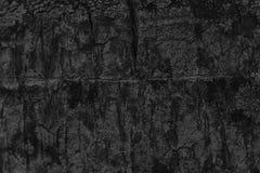 Monochromatycznej drzewko palmowe barkentyny tekstury Drewniany tło dla strony internetowej i urządzeń przenośnych Obraz Royalty Free