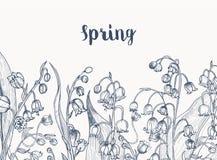 Monochromatyczny horyzontalny tło z lelują dolin kwiatonośne rośliny wręcza patroszonego z konturowymi liniami na bielu ilustracja wektor