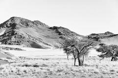 Monochromatyczny trawy, diuny i góry krajobraz blisko Sossusvlei, Fotografia Stock