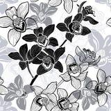 Monochrome безшовная предпосылка с орхидеями нарисованными рукой. Стоковое Изображение RF