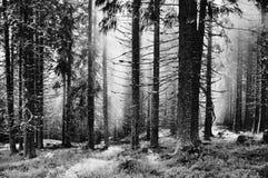 Monochrome лес в весеннем времени Стоковые Фотографии RF