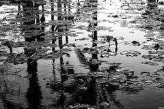 Monochrome изображение отражения на воде стоковое изображение rf