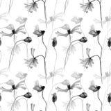 Monochrome иллюстрация акварели маков цветет с лепестком Стоковые Фото