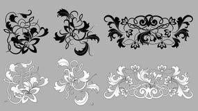 Monochrome картины цветка Стоковое Фото