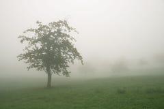 Monochrome туманный ландшафт дерева Стоковые Изображения RF