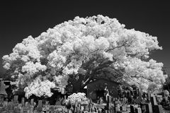 Ультракрасная фотография, monochrome Стоковое Фото