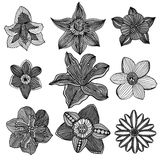 Monochrome abstract doodle flowers Stock Images
