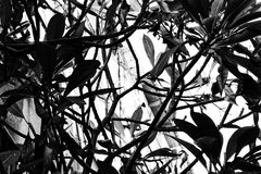 A monochrome abstract pattern of leaves and branches. Black and white photo of a floral pattern consisting of leaves and plant branches Royalty Free Stock Images