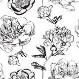 Monochrome asiatique de pivoines d'encre illustration stock