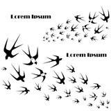 Monochrome background flying swallow Lorem ipsum stock. Vector illustration design element Royalty Free Stock Photos