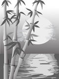 Monochrome bamboo scene Stock Photos