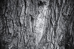 Monochrome bark of old oak tree, abstract nature background Stock Photo