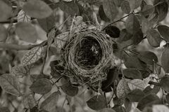 Monochrome Bird`s Nest Royalty Free Stock Image