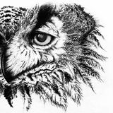 Monochrome black and white owl ink line art sketch Stock Image
