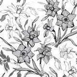 Monochrome botanical seamless pattern with hand drawn flowers daffodils royalty free stock photo