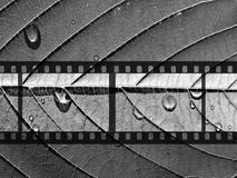 Monochrome camera film.  Stock Photos