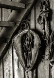 Hone is Where You Hang Your Harness. Monochrome closeup shot of old antique horse riding equipment hung on the wall of of an old wooden barn Royalty Free Stock Image