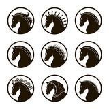 Set of horse heads Royalty Free Stock Photo