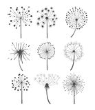 Monochrome Dandelion Set Vector Illustration Royalty Free Stock Image