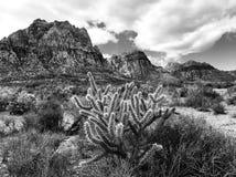Monochrome de cactus de désert photo stock