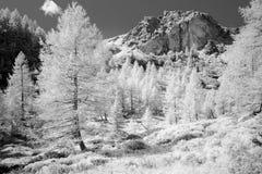 Monochrome de paysage de flanc de montagne Photos libres de droits