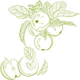 Monochrome drawing apples and apple branch Royalty Free Stock Photos