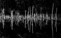 Monochrome dry trees Stock Photography