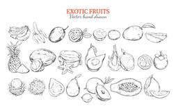 Monochrome Exotic And Tropical Fruits Collection Stock Image