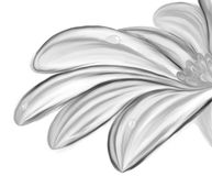 Monochrome flower with dew closeup. Black white hand drawn  flower with water drops Royalty Free Stock Photo