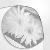 Monochrome flowers. Stylish light background. Stock Photography