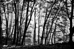 Monochrome forest background stock photo