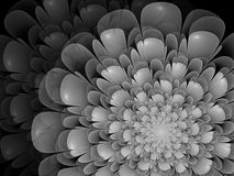 Monochrome fractal background. Digital collage. Monochrome abstract background with fractal flower can be used as an alpha channel for video and design projects Stock Photos