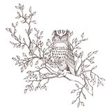 Monochrome graphic vector owl sitting on a tree branch isolated vector illustration
