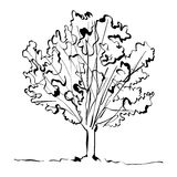 Monochrome hand drawn tree on white background. Stock Photography