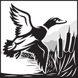 Monochrome illustration with flying wild duck over the water Royalty Free Stock Image