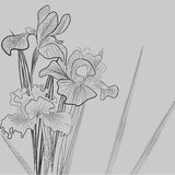 Monochrome illustration with Iris flowers Stock Images