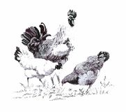 Monochrome illustration of rooster and hens.  Royalty Free Stock Photos