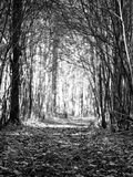 Monochrome image of an autumn road with fallen leaves which goes through a forest tunnel Stock Images