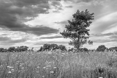 Monochrome image. Gloomy sky over the flowered Bogolyubovo meadow, Vladimir region, Russia. royalty free stock photo