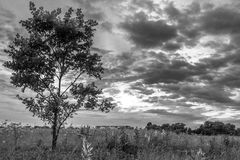 Monochrome image. Gloomy sky over the flowering Bogolyubovo meadow, Vladimir region, Russia. royalty free stock photo