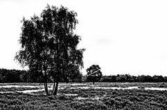 Monochrome image of heathland in the Netherlands.  Stock Image