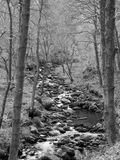 Monochrome image of a hillside stream running through mossy rocks and boulders with overhanging forest trees in dense woodland. Monochrome image of a hillside royalty free stock photography