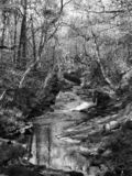 Monochrome image of a river running down a steeply wooded hillside in west yorkshire royalty free stock images