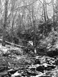 Monochrome image of snow covered woodland with steep hillside stream running over rocks and boulders royalty free stock images