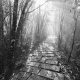 Monochrome image of the wet stone path in Zhangjiajie Forest Park. Monochrome image of the wet stone path in Zhangjiajie Forest Park at foggy autumn morning Royalty Free Stock Image