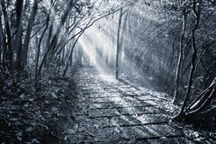 Monochrome image of the wet stone path in Zhangjiajie Forest Park. Monochrome image of the wet stone path in Zhangjiajie Forest Park at foggy autumn morning Royalty Free Stock Photography